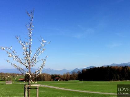 Alpy wiosną