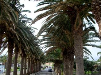 Porto Santo Aleja Palm