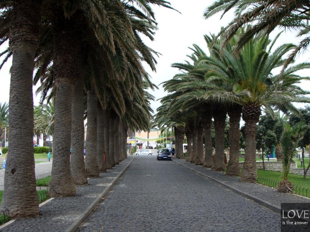 Porto Santo - aleja palmowa