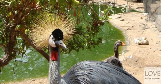 Dolina ptaków Agadir