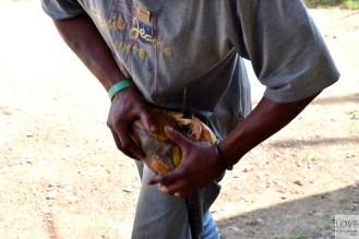 rozłupywanie kokosa