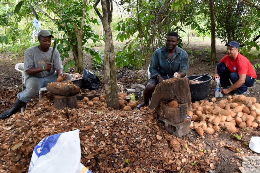 Obieranie kokosów