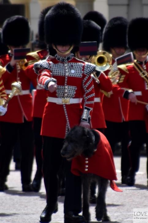 zmiana wart- Pałac Buckingham