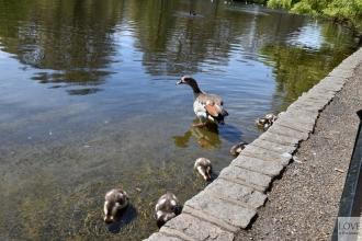 St. James' Park- Londyn