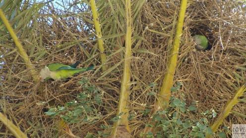 Papugi w Parku Güell