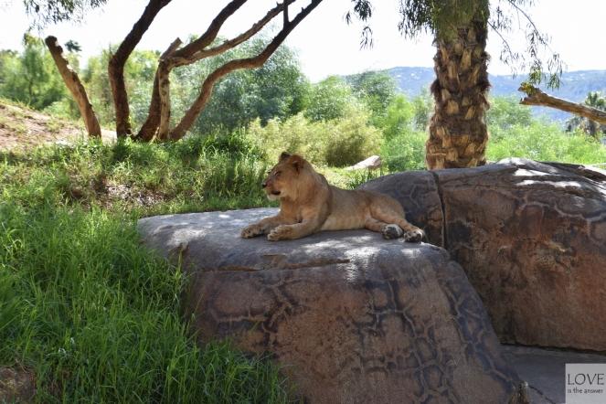 Zoo Safari San Diego