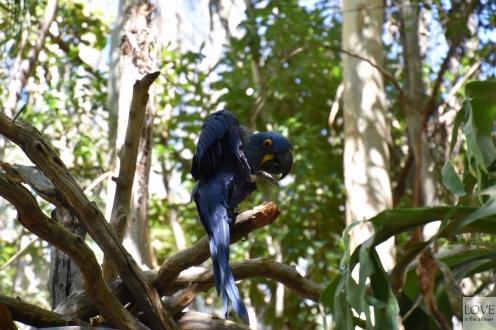 Papuga w San Diego Zoo Safari