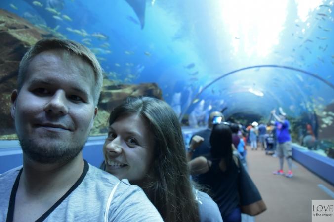 Georgia Aquarium - Atlanata