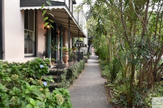 zielona Savannah
