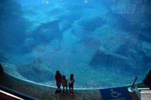 akwarium.... Georgia Aquarium, Atlanta