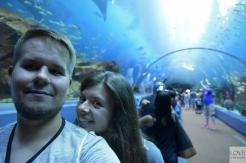 love is the answer w Georgia Aquarium, Atlanta
