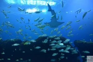 Georgia Aquarium, Atlanta
