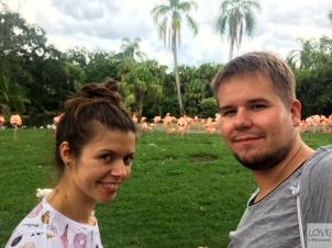 z flamingami w Tampa Busch Garden