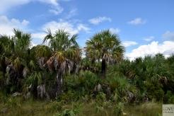 Piękna zielona Floryda
