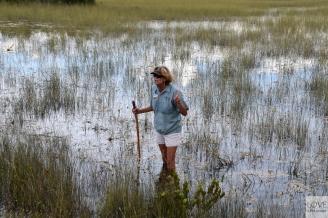 Pasjonujące ciekawostki w Everglades
