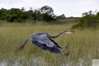 natura w Everglades